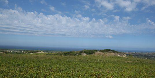 Vigna Panorama Mozzafiato tutto il Golfo Asinara