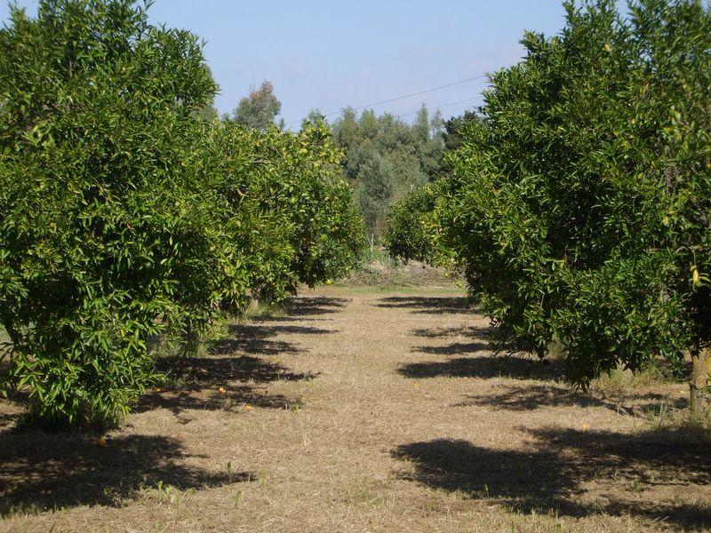 Terreno agricolo con frutteto privatimmobiliaresardegna for Vendita piante da frutto sardegna