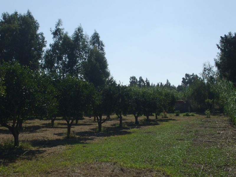 Terreno agricolo con frutteto.