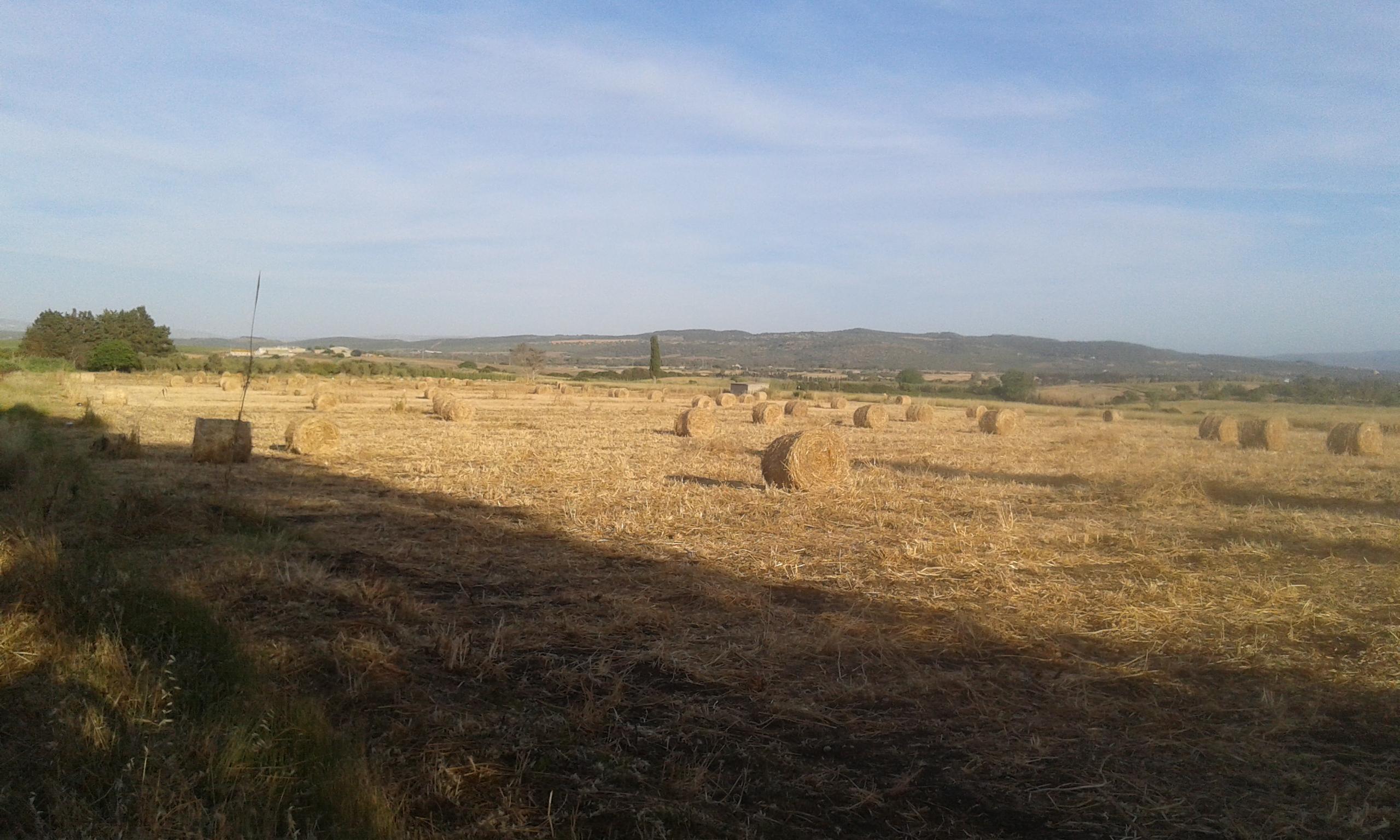 Terreno agricolo a Tottubella