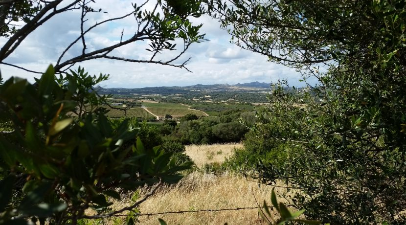 terreni capichera marchese patti 9