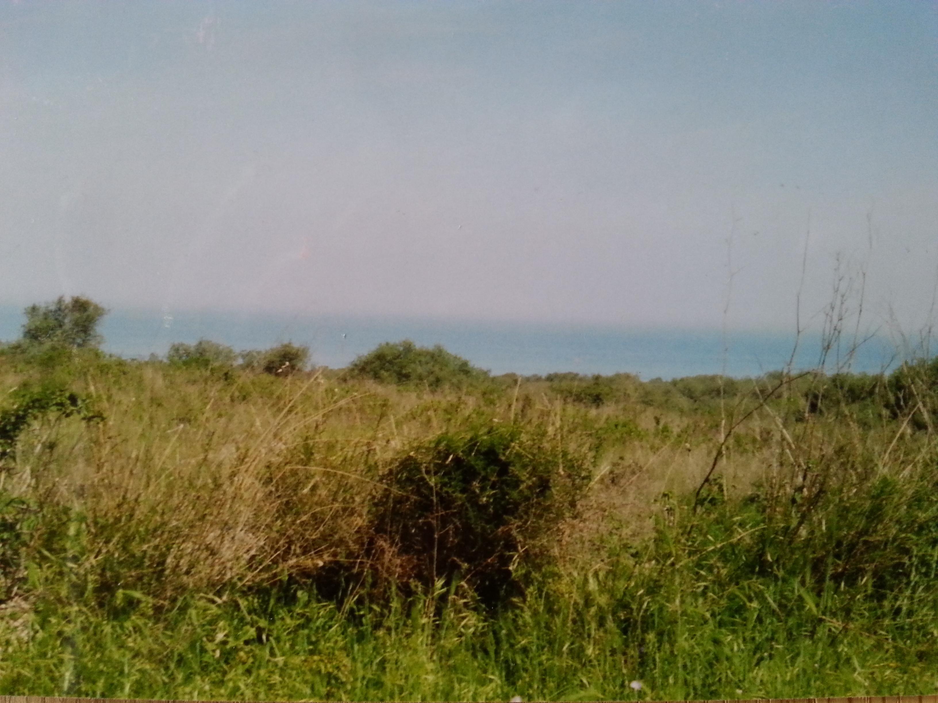 grande uliveto / terreno agricolo edificabile / vista mare