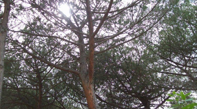 Alberi nel giardino della casa (FILEminimizer)