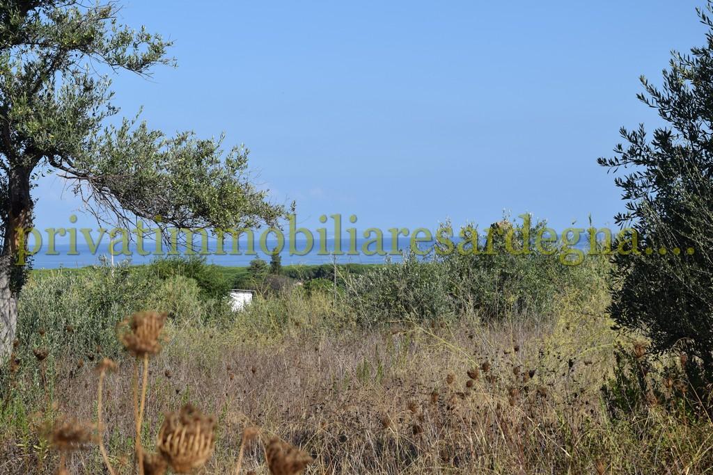 Sorso Terreno Oliveto 17.000 mq, con rudere vista mare
