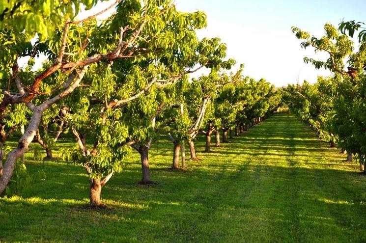 Cerco terreno in Sardegna con alberi da frutto, acqua, casa o cubatura edificabile, almeno 5000 mq