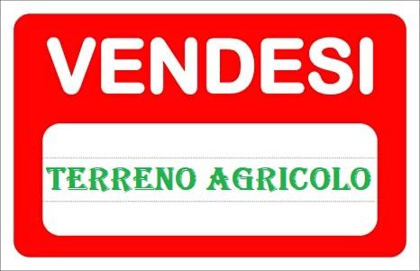 TERRENO AGRICOLO POSIZIONE CENTRALE